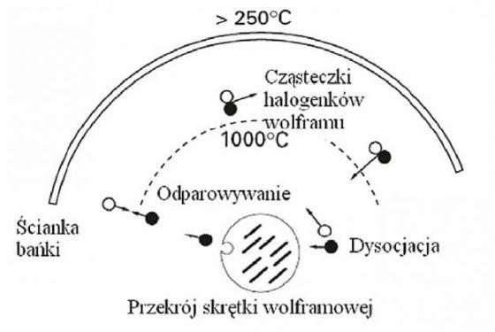 cykl halogenowy, oświetlenie halogenowe