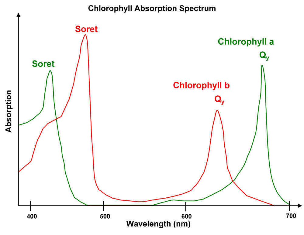 Widmo absorbcyjne chlorofilu